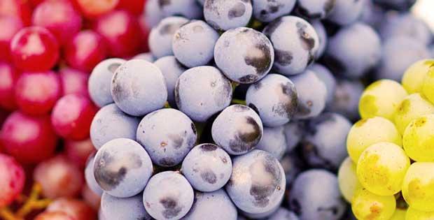 العنب في الكيتو هل مسموح